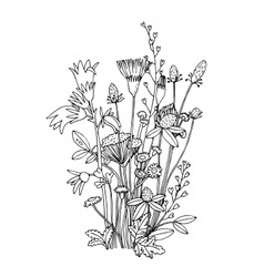 Sketch of the wildflowers on a white background vector image vector image