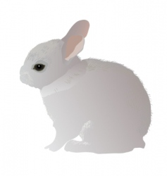 Gray rabbit vector