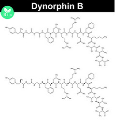 Dynorphin B chemical structure vector image vector image