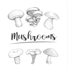 mushrooms sketch hand vector image