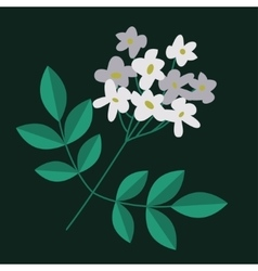 Flowering branch isolated vector