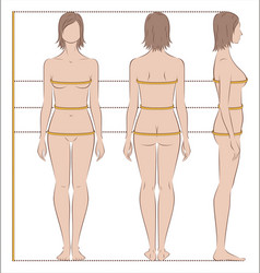women body measurements vector image
