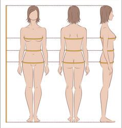 Women body measurements vector