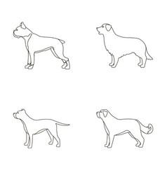 Boxer pit bull st bernard retrieverdog breeds vector