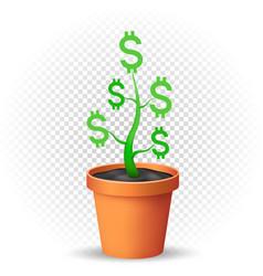 dollar plant grows in flowerpot vector image vector image