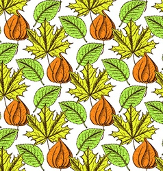 Sketch physalis and leaves vector image vector image
