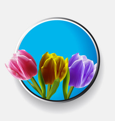 trio of tulips over metallic border vector image vector image