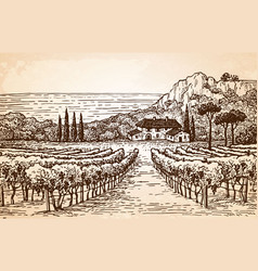 vineyard landscape on old paper vector image