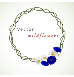 White background with chamomile and vector