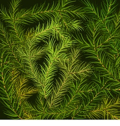 Fir branch background vector image vector image