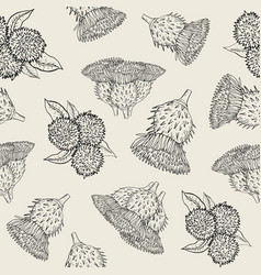 burdock seamless texture with hand drawn buds vector image vector image