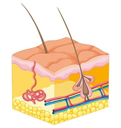 Hair coming out of human skin vector