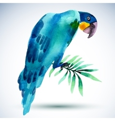 Watercolor bird blue parrot isolated on white vector