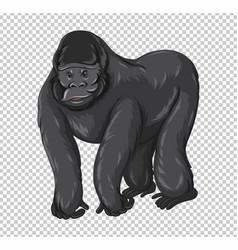 wild gorilla on transparent background vector image vector image