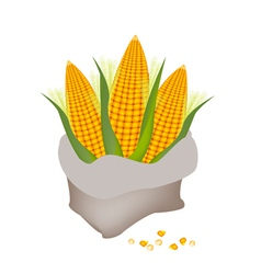 A pile of fresh corn in a sack vector