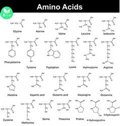 Biogenic amino acids formulas vector image vector image
