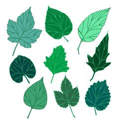 Leaves set vector