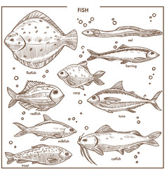 Fish sketch species with names isolated vector