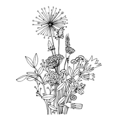Sketch of the wildflowers on a white background vector image