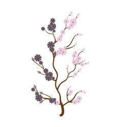 sakura japanese plant icon vector image