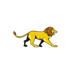 Angry lion walking roar cartoon vector