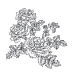 Rose flowers and leaves in vintage style hand vector