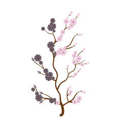 Sakura japanese plant icon vector