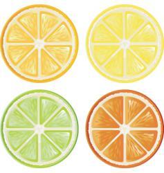 citrus vector image