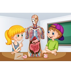 Students learning about human anatomy vector