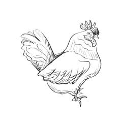 Doodle bantam vector