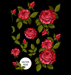 set of red roses and elements for your design vector image