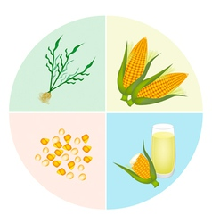 The process of corn production in pie chart vector