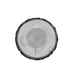 tree log rings icon tree wooden cross vector image
