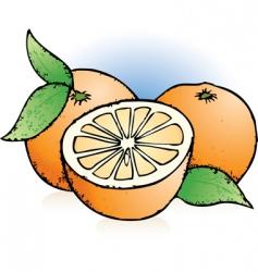 oranges sketch vector image