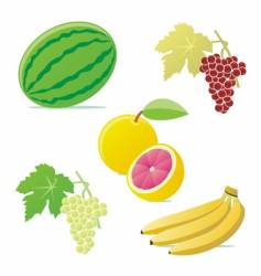 isolated fruits vector image