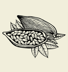 Image of cocoa beans vector