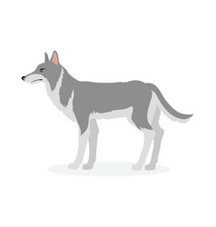 wolf cartoon in flat design vector image vector image