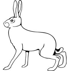European hare vector