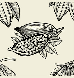 leaves and fruits of cocoa beans vector image