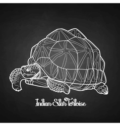 Indian star tortoise vector