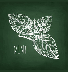 Chalk sketch of mint vector