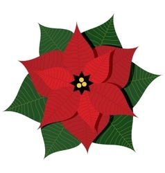 With christmas star plant or vector