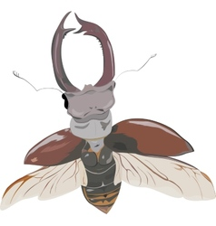 Stag-beetle in fly vector
