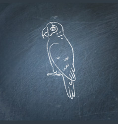 Amazon parrot icon sketch on chalkboard vector