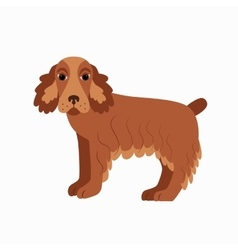 Flat cocker spaniel pet vector