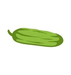 Fresh green cucumber isolated vector