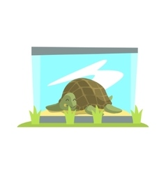 Big green turtle laying inside glass terrarium in vector