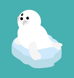 Seal baby on a ice floe vector