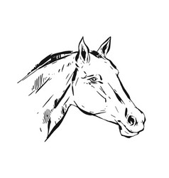 Hand drawn lined ink graphic horse head vector