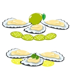 Sea food shells of oysters lemon and lime pieces vector